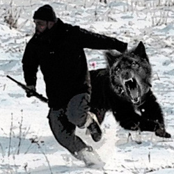 wolf-jagt-jaeger