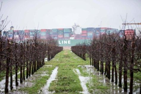 Das rund 400 Meter langes Containerschiff CSCL Indian Ocean liegt am 04.02.2016 in der Elbe bei Stade (Niedersachsen) auf Grund, im Vordergrund sind Weinreben zu sehen. Foto: Lars Klemmer/dpa (zu dpa «Großes Containerschiff in Elbe auf Grund gelaufen» vom 04.02.2016) +++(c) dpa - Bildfunk+++