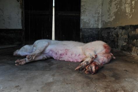Schweinehochhaus 6